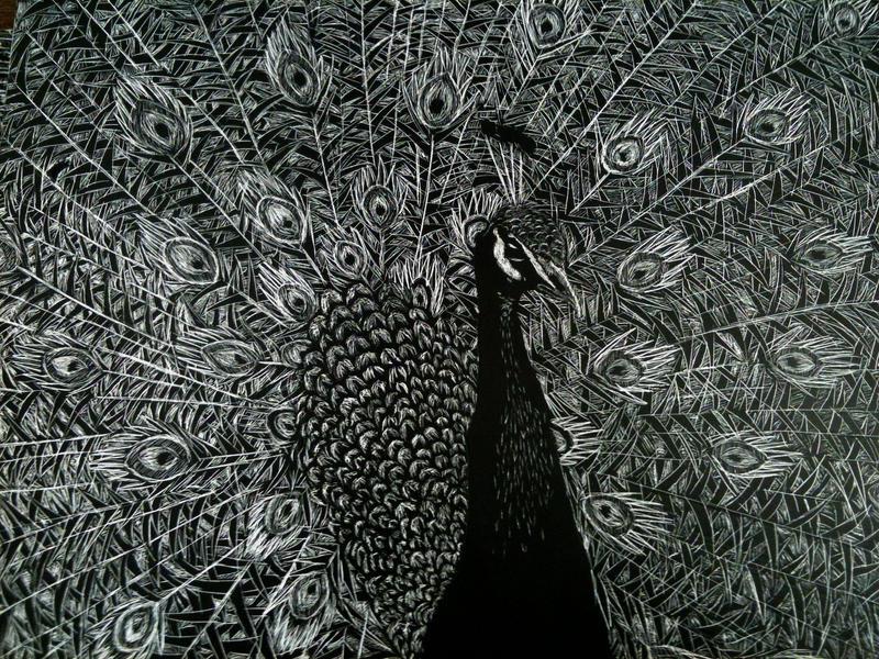 Peacock Scratch Board By Hemolaca
