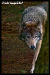 tense by Wodenswolf