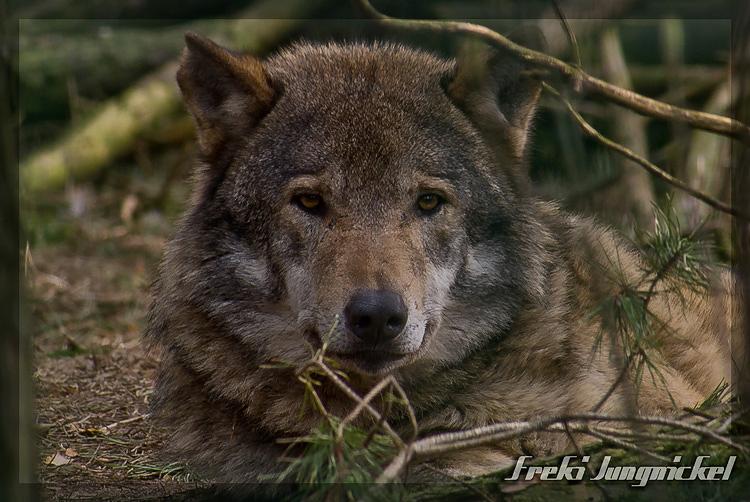 Wisdom of the wild by Wodenswolf