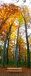 Prag autumn by brzda