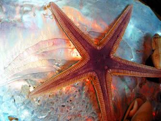 Starfish by creatrix