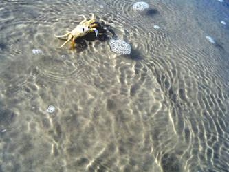 Crab by creatrix