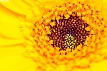yellow flower by RaumKraehe