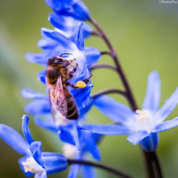 honeybee by RaumKraehe