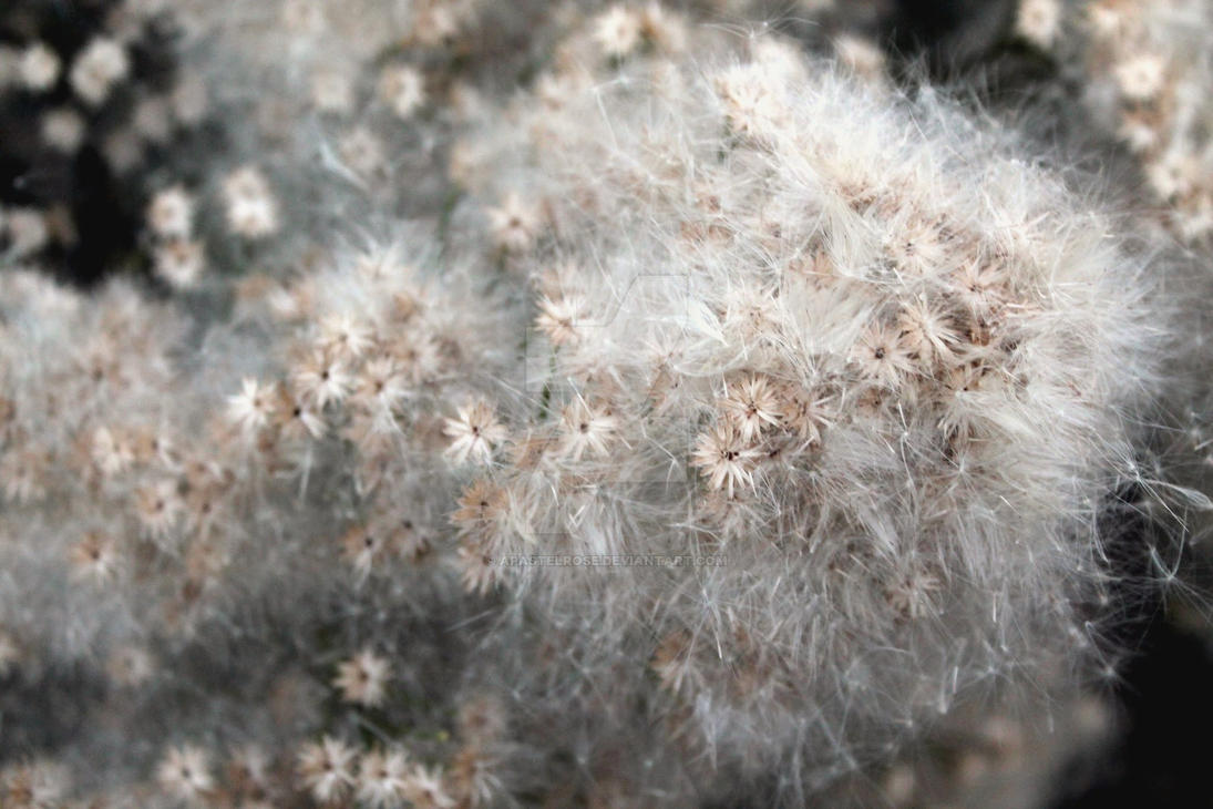 Soft Textures by APastelRose