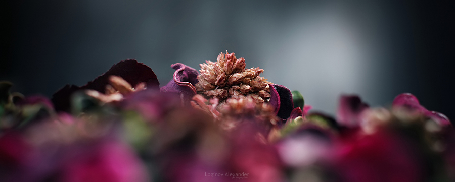 Dry flowers by AlexanderLoginov