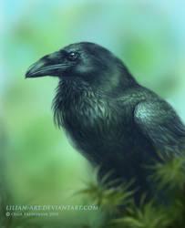 I love ravens