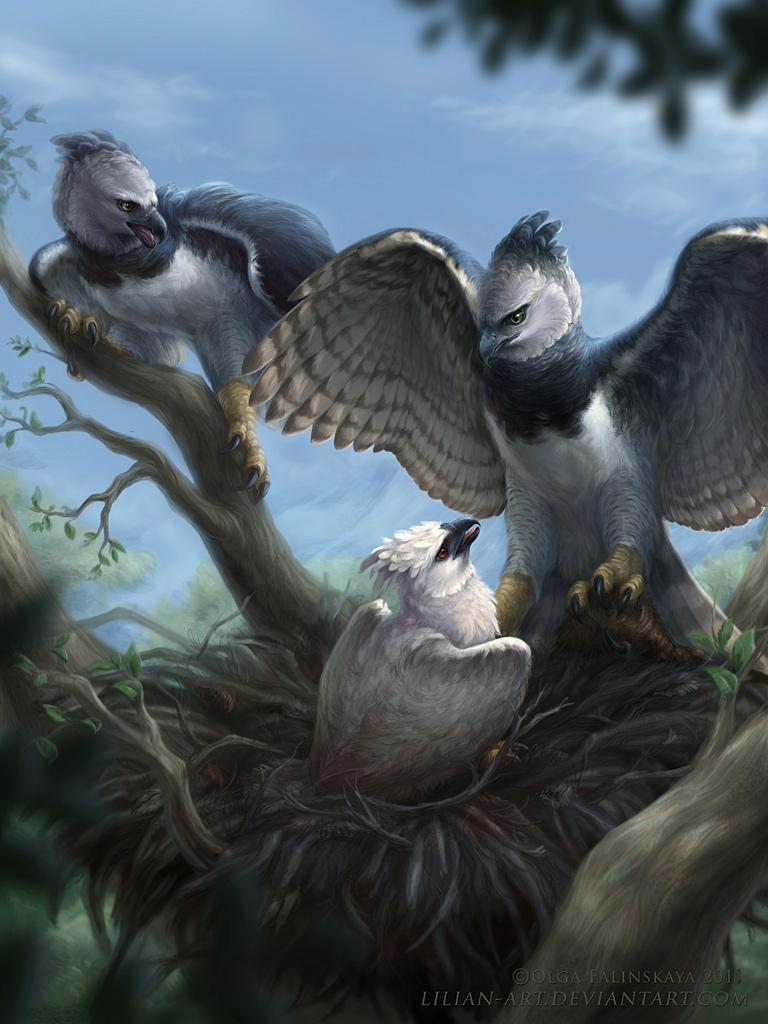 Harpia harpyja by Lilian-art