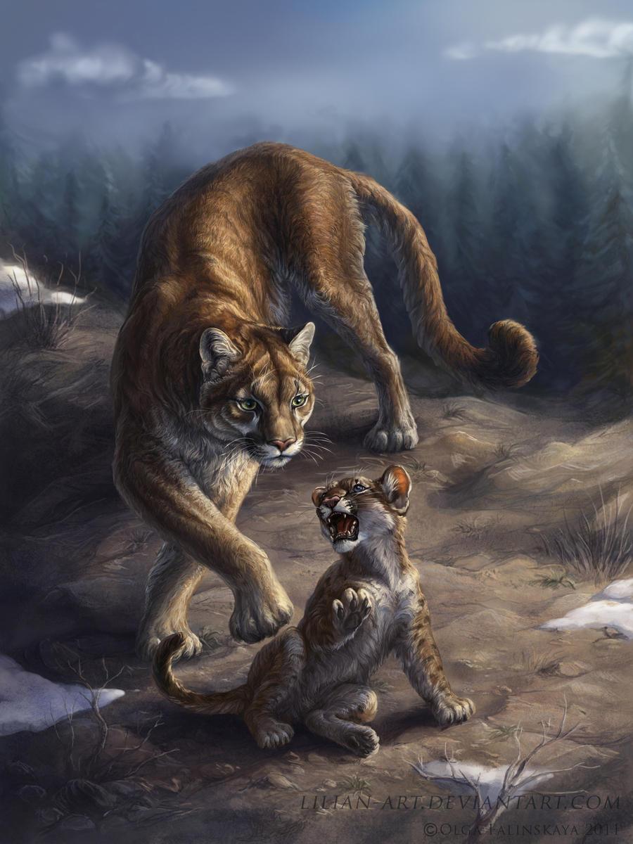 Puma concolor by Lilian-art