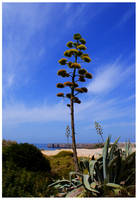 Beira Mar... by Waterlilynl