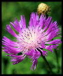 Garden Flowers 5