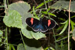 Butterfly013 - stock