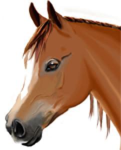 Hanaelle's Profile Picture