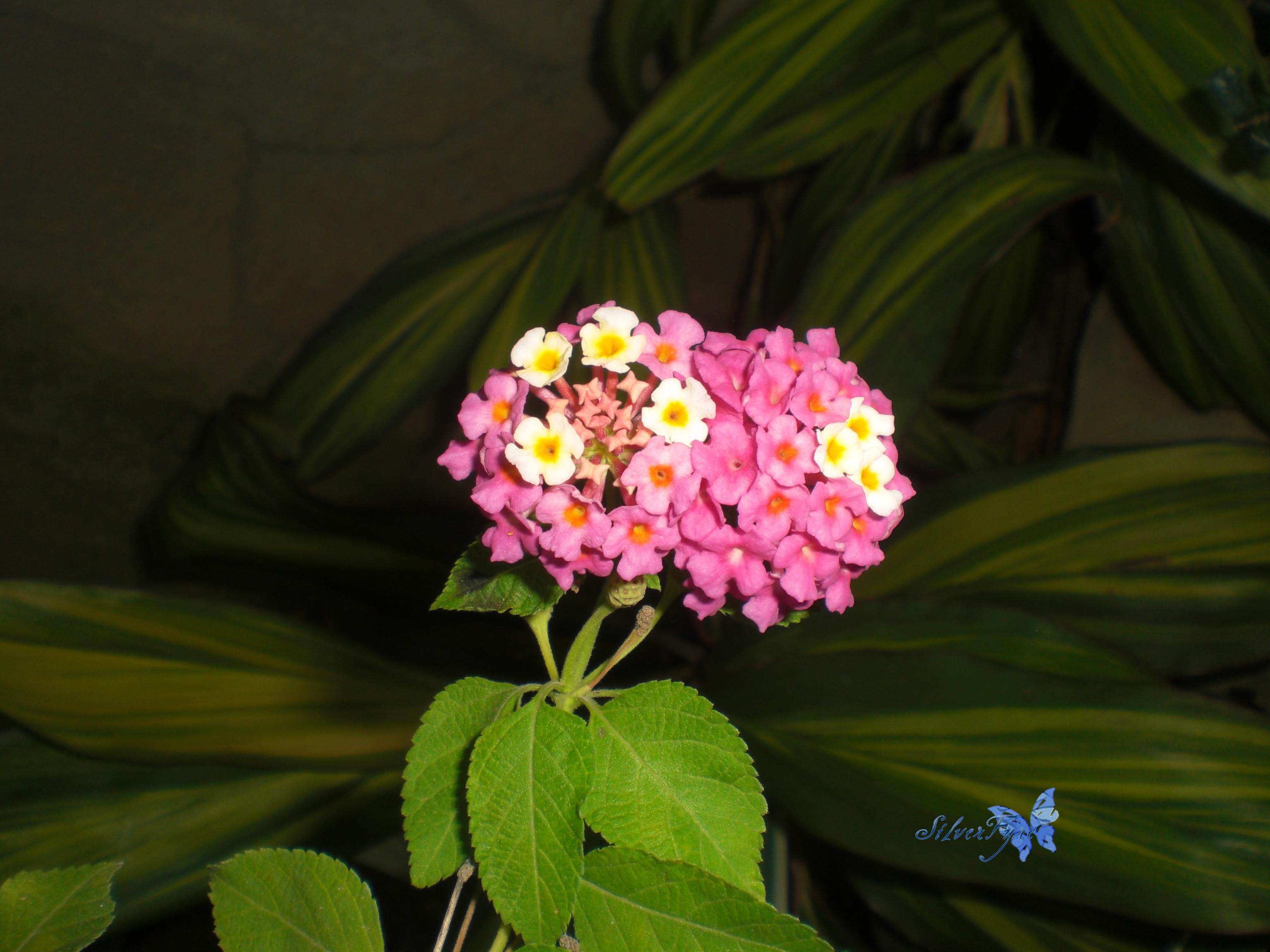 Flowers by bloodyblue