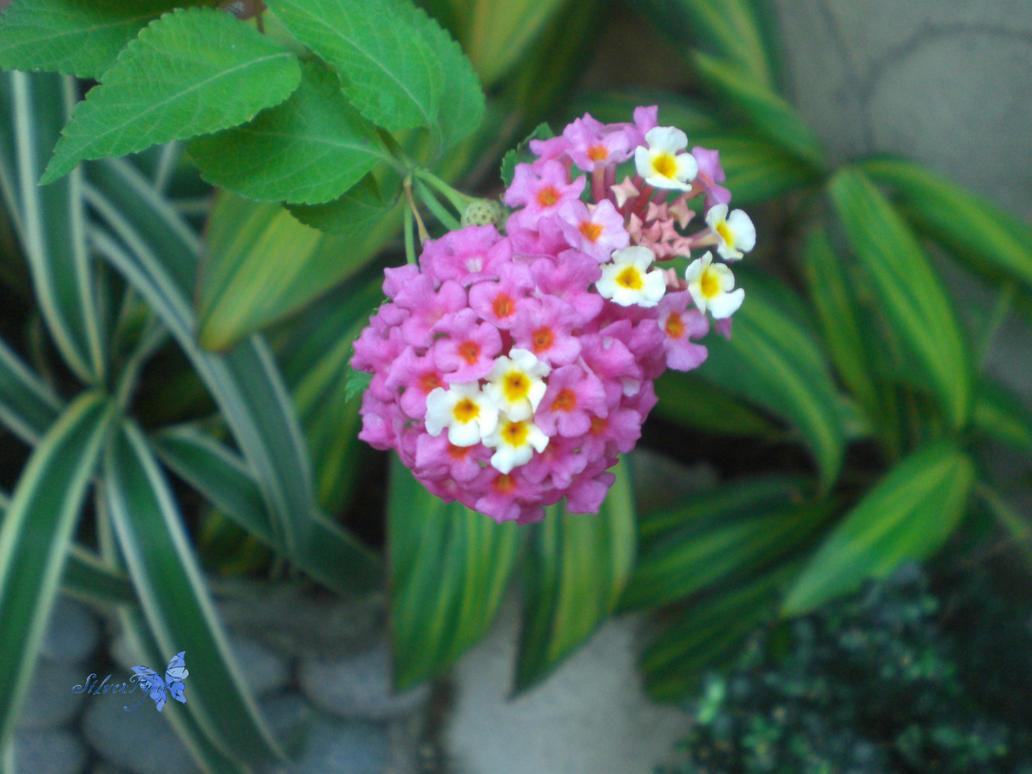 Flower II by bloodyblue