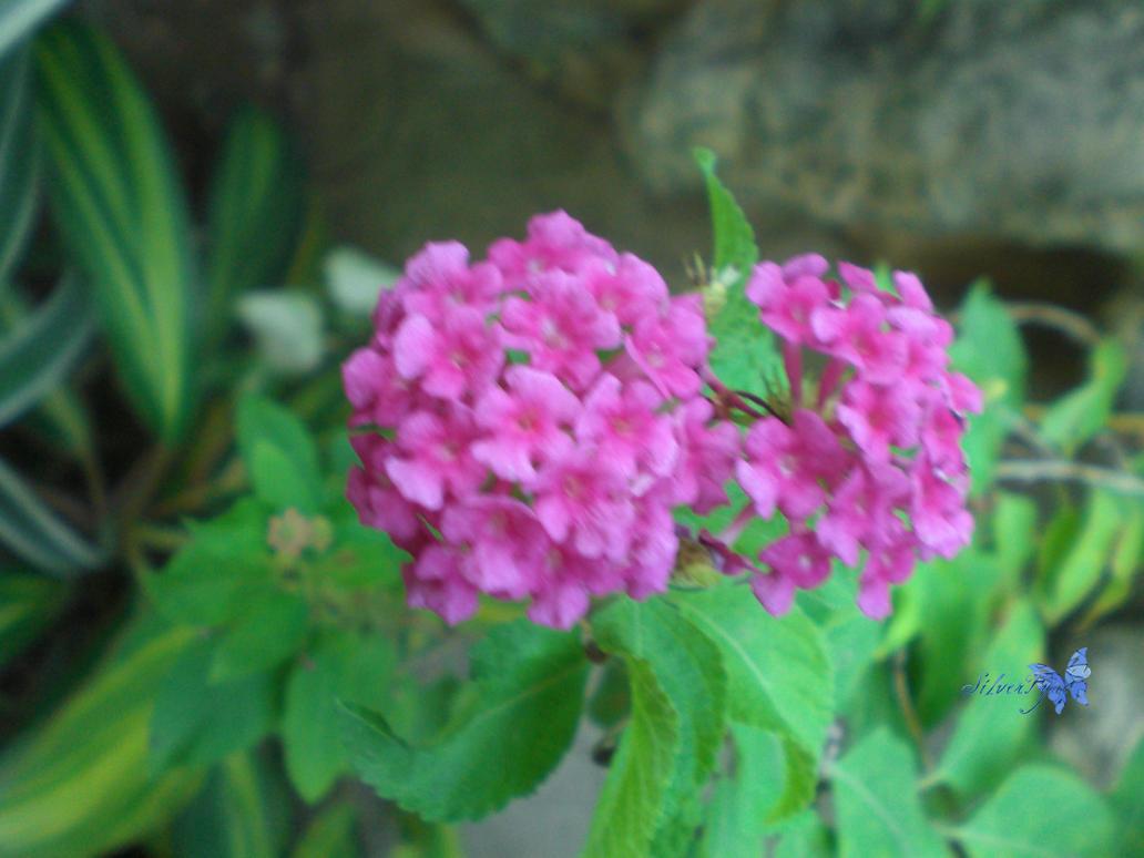 Flower III by bloodyblue