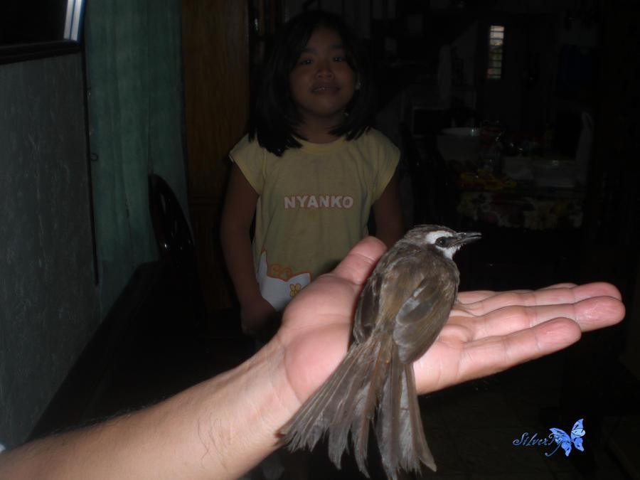 animal: bird 2 by bloodyblue