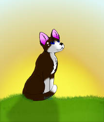 Dawnstar (Prize for wildcats11085) by Lizthewolflover