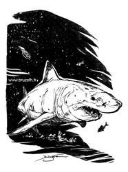 Requin (shark)
