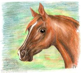Arabian portrait by GalopaWXY