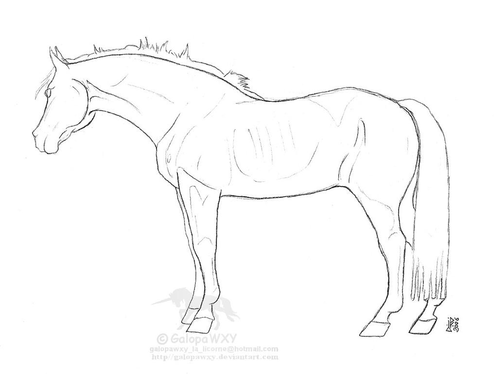 Breeds Selle Francais LINEART By GalopaWXY