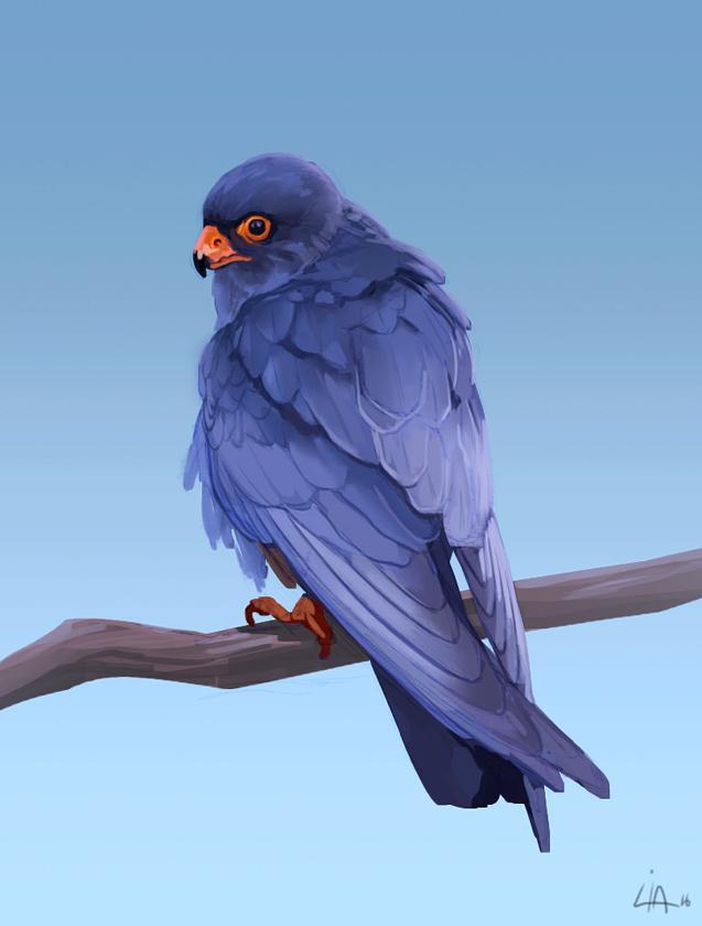 2 Hour Bird Study by Tokoldi