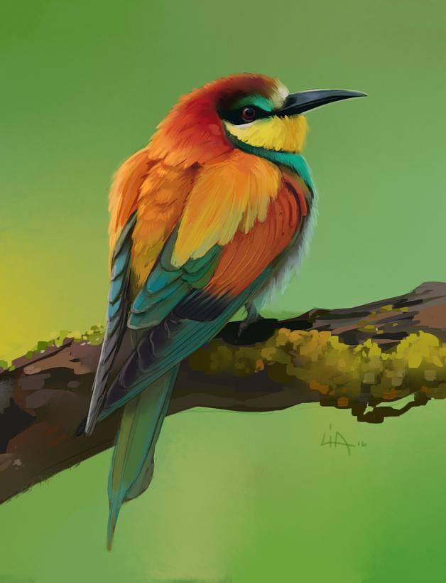 2 Hour Bird Study #2 by Tokoldi
