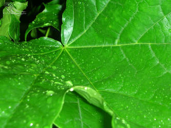 Leaf in the Rain by ElisabethvonAustria