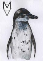Penguin Watercolour by sarah-mca-art