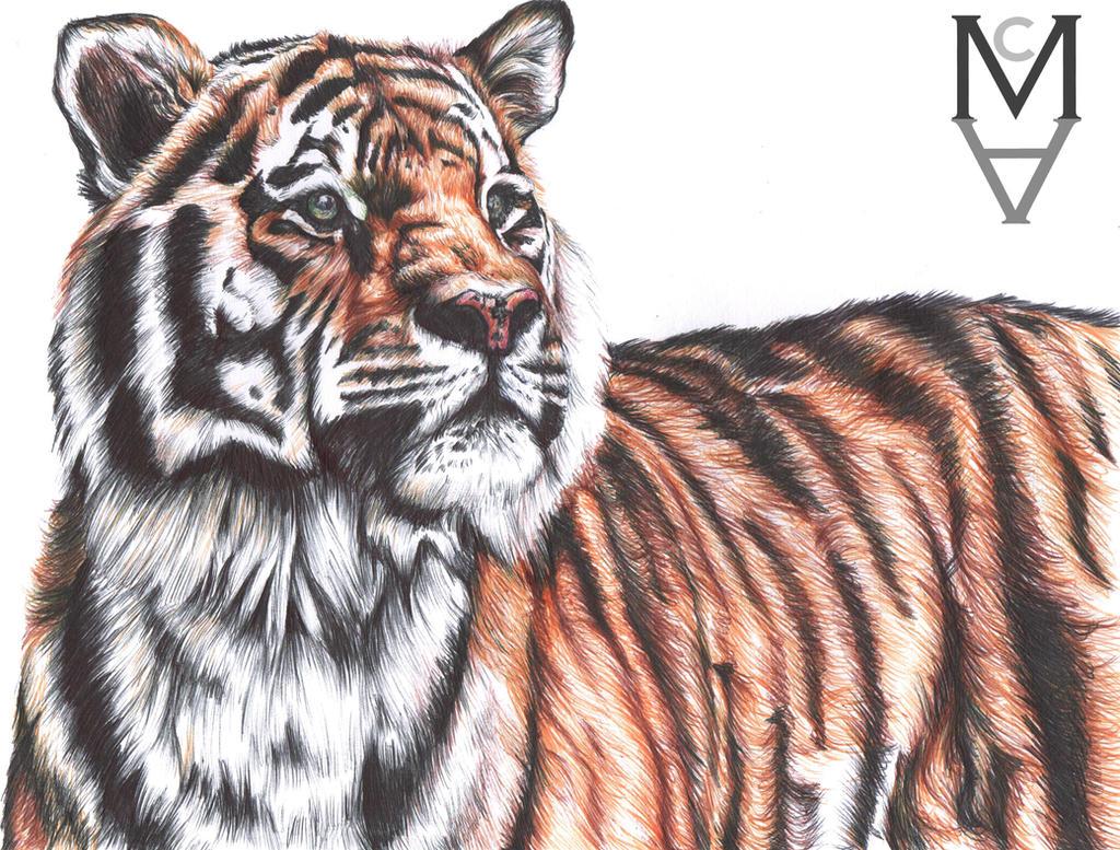 Tiger (Colour Biro Pen Drawing) by sarah-mca-art