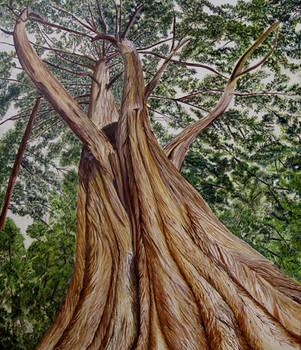 The Tree... by sgarciaburgos