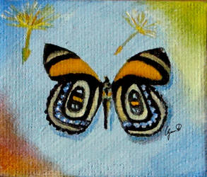 Butterfly Collection by sgarciaburgos
