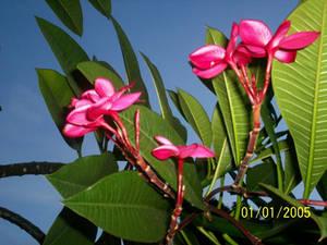 Fleur Flor Flower