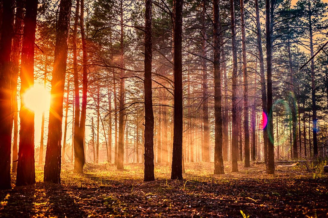 人がいない森からの夕焼け
