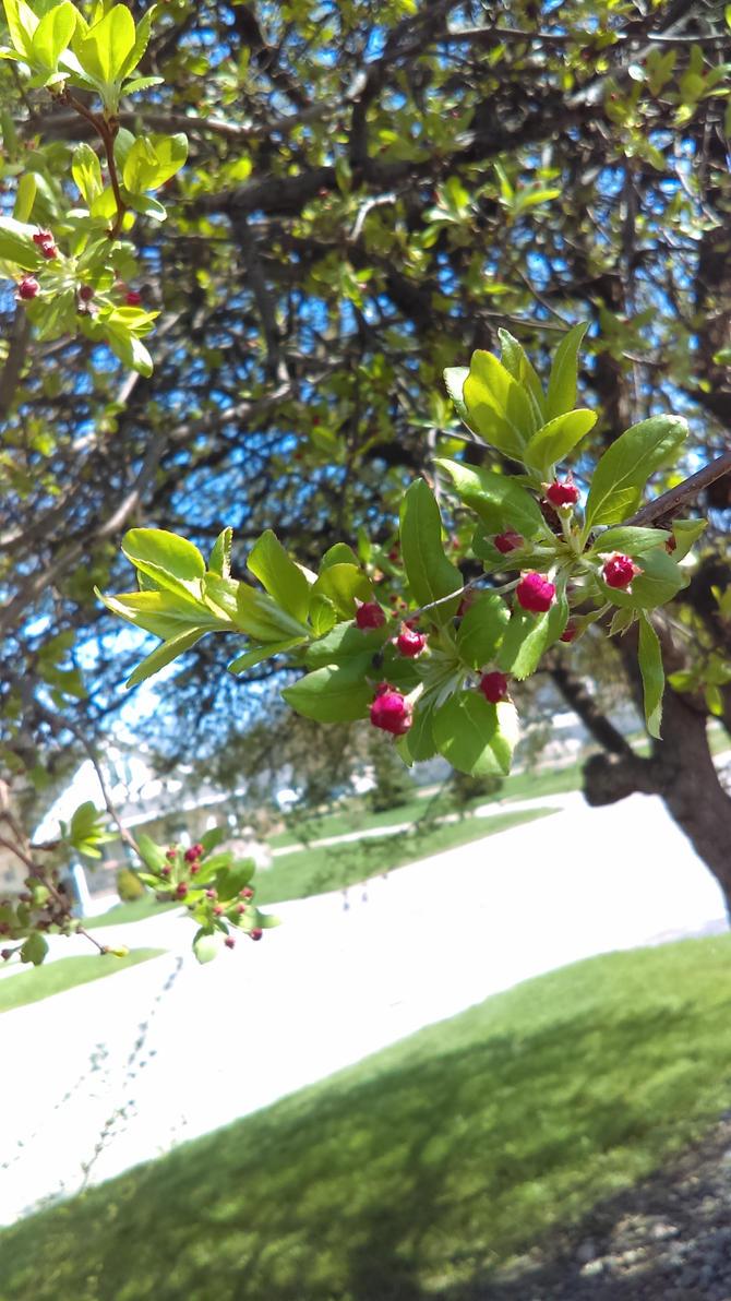 Spring buding by JamesxJackson