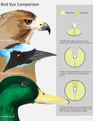 bird eye comparison by Industrial-Ace