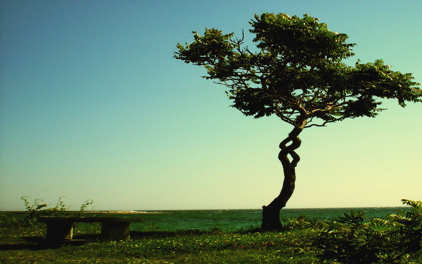 Os melhores Wallpapers Spiral_tree_by_Zaqheartcore