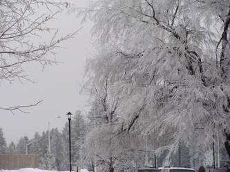 Frosty Fringes by spasmatic-irishlover