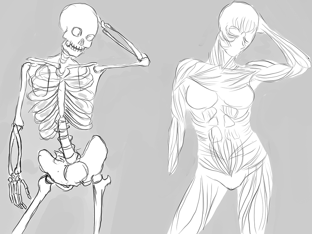 Anatomy practice by Spifmo on DeviantArt