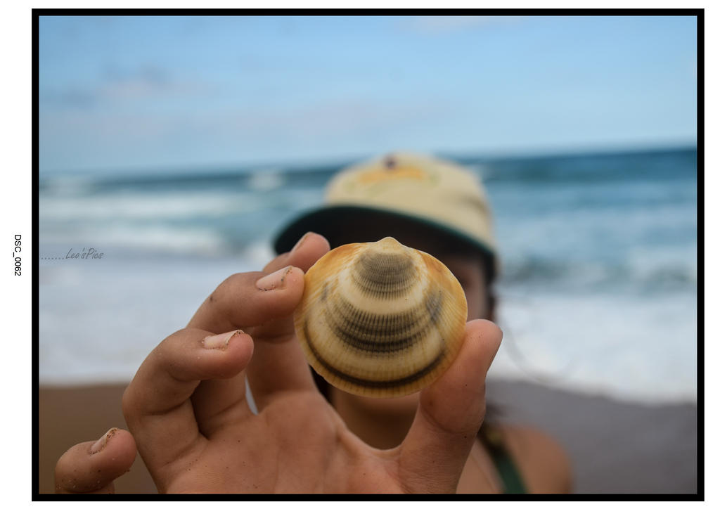 Shell, by monte45