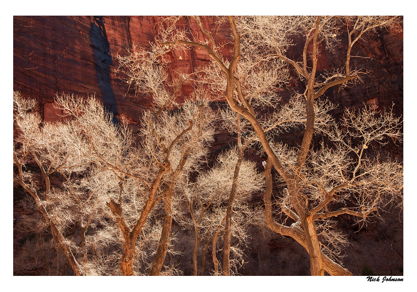 Cottonwoods and Sandstone by collectiveone