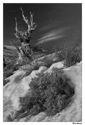 Bristlecone Twilight by collectiveone