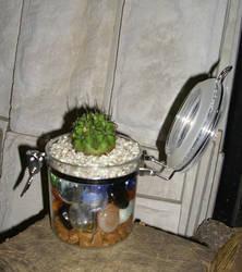 Cactus by amatoring
