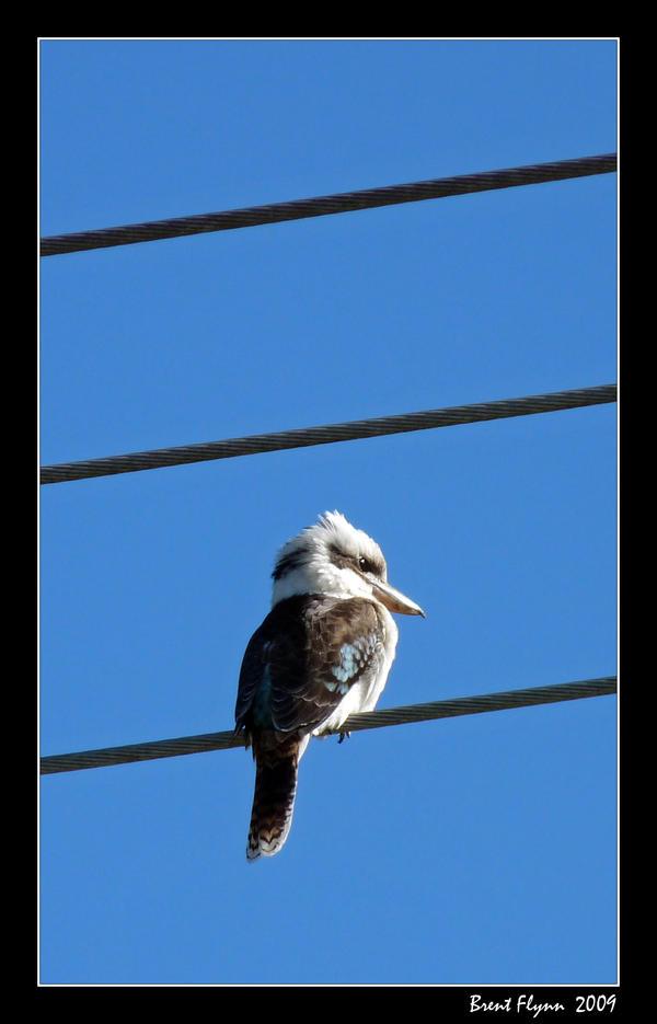 Bird on a Wire by DarthIndy