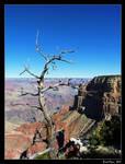 Canyon Branch