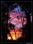 Sunset Silhouette 02