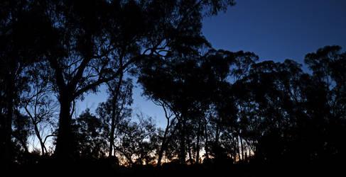 Treeline Silhouette by DarthIndy