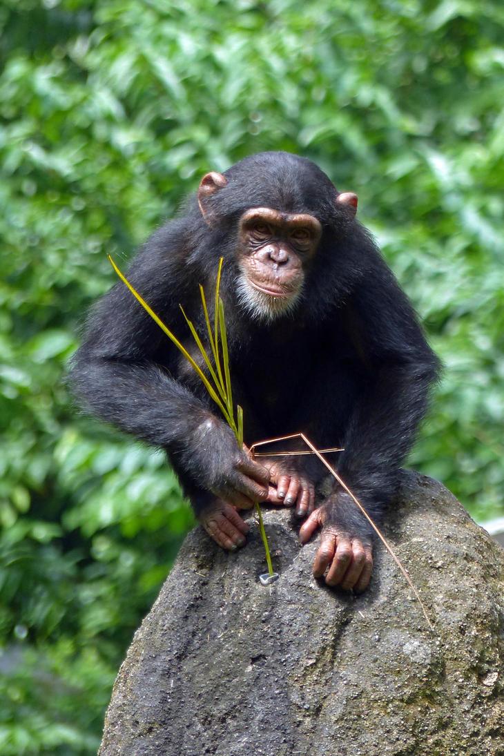 Monkey Business by DarthIndy