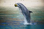 Jumping dolphin with ball
