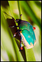 Beetle - 1 by LeGreg
